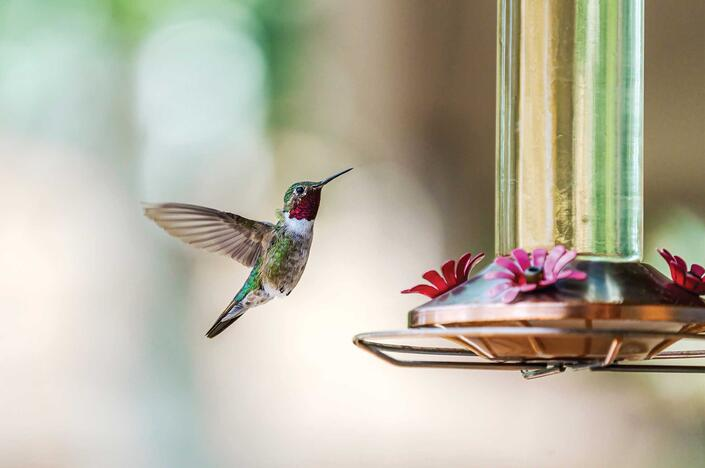 How to Create a Bird-friendly Oasis
