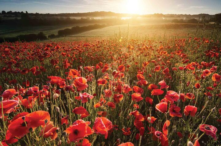 Marking the 100th Anniversary of Armistice (1918-2018)